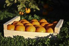 Naranja Navelina Caja 10 Kg