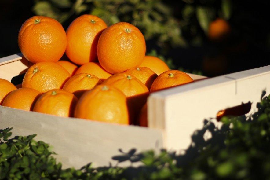 Naranja Navelina Caja 15 Kg